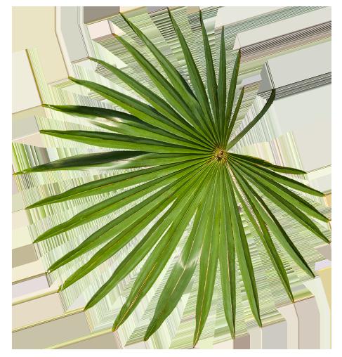 plante tropicale Kantine